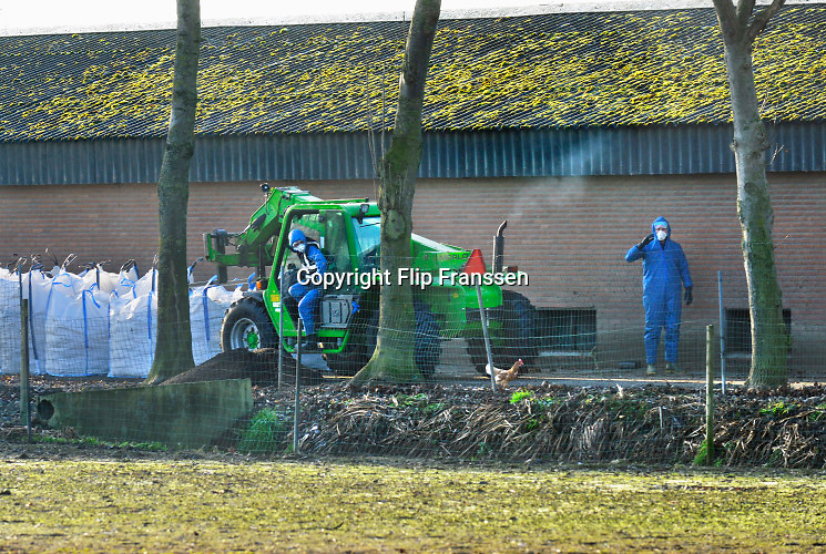 Nederland, the Netherlands, Beneden Leeuwen, 20-12-2016Op een kippenboerderij in dit dorp in het land van Maas en Waal is kippengriep geconstateerd. Het bedrijf wordt geruimd, evenals twee anderen in de straal van 1 km. De dieren worden dmv C)2 vergasten in grote zakken gestopt . Een kip weet te ontsnappen, maar wordt weer gevangen .Foto: Flip Franssen
