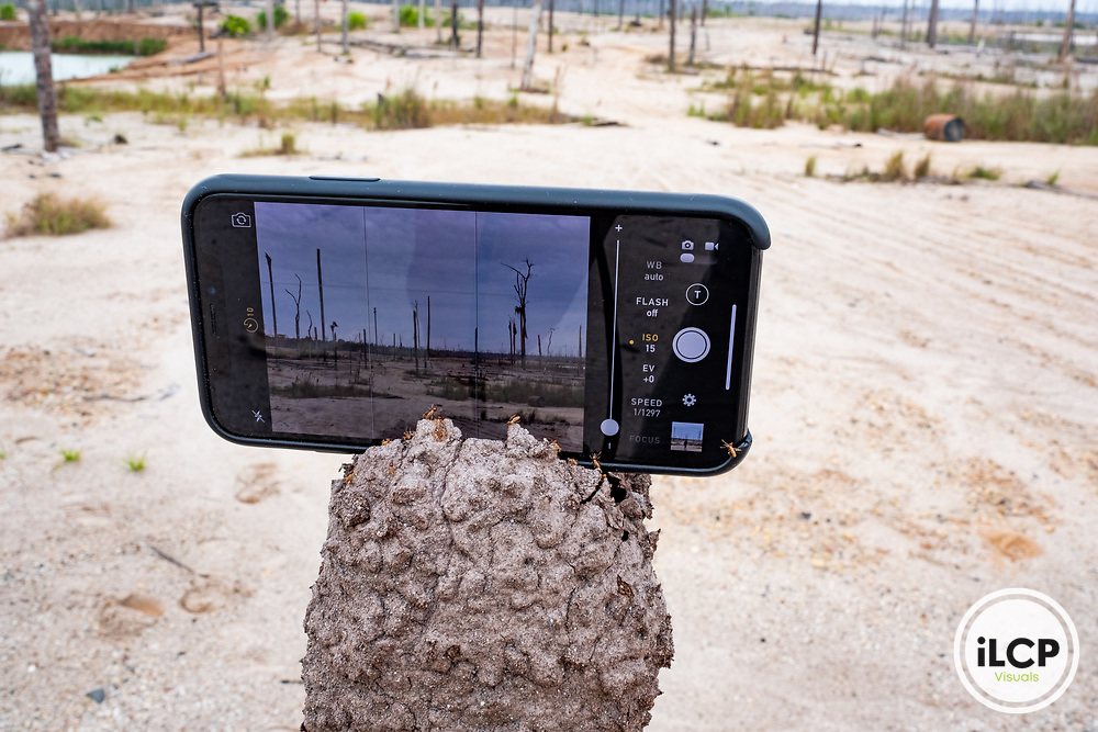 The set up of an iPhone in a termite nest, bracing it for a self-portrait of photographer Jason Houston. Following Peru's February 2019 militarized crackdown on illegal and unofficial alluvial gold mining in the La Pampa region of Madre de Dios, Wake Forest University's Puerto Maldonado-based Centro de Innovación Científica Amazonia (CINCIA), a leading research institution for the development of technological innovation for biological conservation and environmental restoration in the Peruvian Amazon, is applying years of scientific research and technical experience related to understanding mercury contamination and managing Amazonian ecosystems. What they learn will help guide urgent remediation, restoration, and reforestation efforts that can also serve as models for how we address the tropic's most dramatically devastated landscapes around the world. La Pampa, Madre de Dios, Peru.