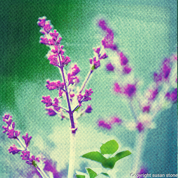 blooming lilacs digital flower photo with a teal green textured background.