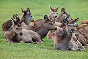 Deer Farm, Southland, New Zealand