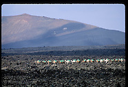 07: CANARY ISLANDS LANZAROTE CAMELS