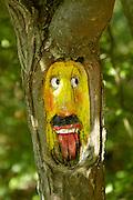 Eifel, Ahrtal bei Bonn..in Baum geschnitztes Gesicht an einem Wanderweg