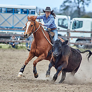 2018 Gladstone Campdraft, NSW
