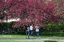 People stop to take pictures among blooming trees as they enjoy the warm sunny weather in London's Regent Park.<br /> Tuesday, 1st April 2014. Picture by Ben Stevens / i-Images
