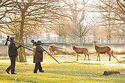 UNITED KINGDOM, London: 05 April 2018 Red deer watch on as wildlife photographers seemingly ignore them as they walk past this morning at Richmond Park. After a miserable week of rain, the sun is set to shine throughout the day. Rick Findler / Story Picture Agency