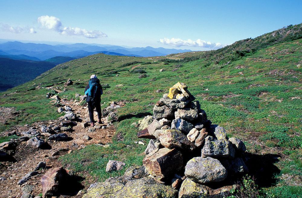 Southern Presidentials. Appalachian Trail. Monroe flats - home of endangered dwarf cinquefoil.  Potentilla robbinsiana. Crawford Path.  White Mountain N.F., NH