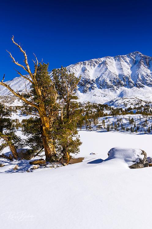 Mount Morgan in winter, John Muir Wilderness, Sierra Nevada Mountains, California  USA