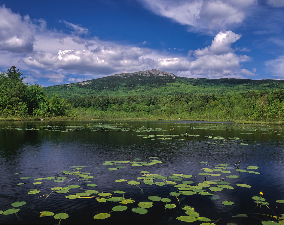 Mt Monadnock and Perkins Pond with Bullhead-Lilies, Troy, NH