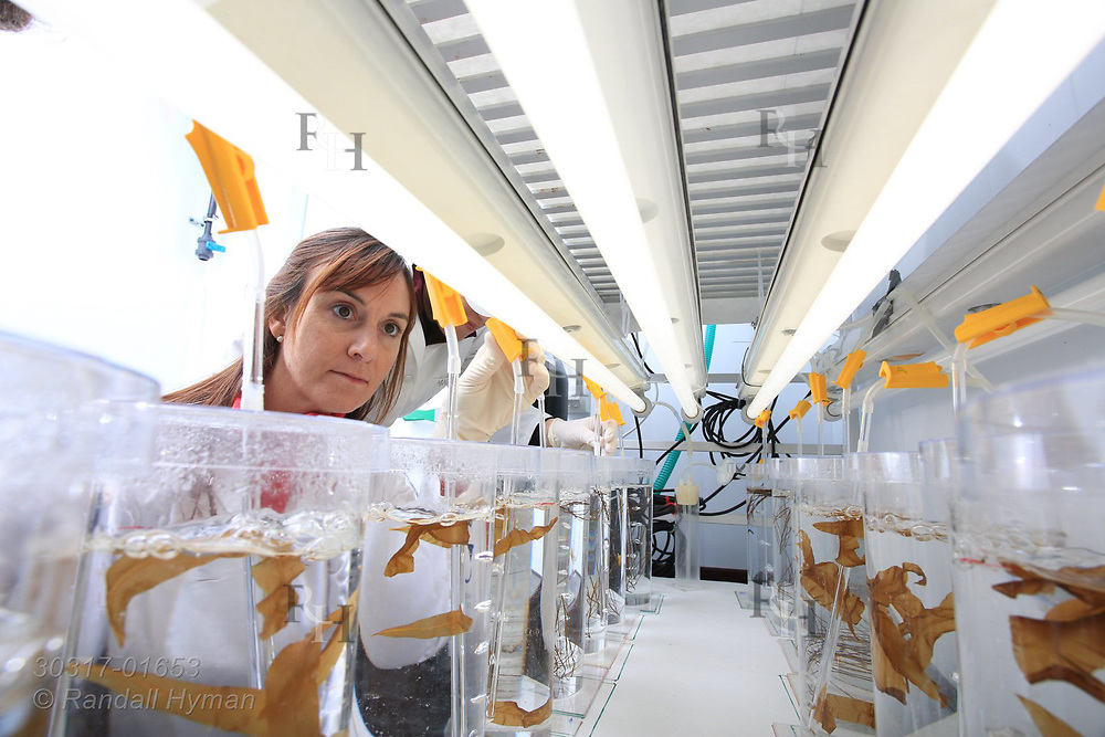 Spanish women scientists culture seaweed in jars at marine science lab in the international science village of Ny-Alesund on Spitsbergen island in Kongsfjorden; Svalbard, Norway.