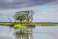 A small palmetto covered hammock with trees sits in the middle of a salt marsh.