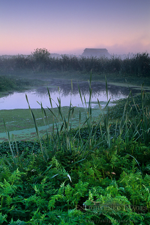 Predawn mist in farmlands beyond the Arcata Marsh, Arcata, Humboldt County, CALIFORNIA