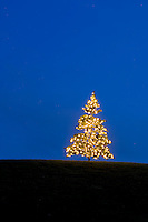 A lone Christmas tree lights on a hilltop creates an intersting design in light and color.