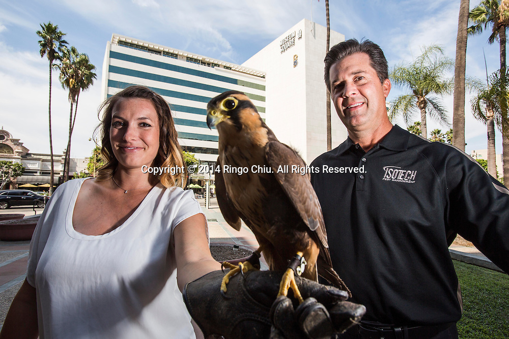 Mike Masterson and Alyssa Ervin of Isotech Pest Management. sotech uses trained hawks and falcons to scare birds away from commercial buildings around Los Angeles. They started out at the Santa Monica Place mall, but now work at buildings all over L.A.<br /> (Photo by Ringo Chiu/PHOTOFORMULA.com)