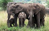 Elephants - Tembo