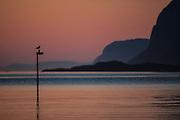Summers night in Herøyfjord with Rundebranden in the background | Sommernatt i Herøyfjord med Rundebranden i bakgrunnen