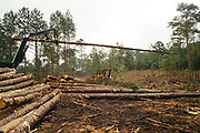 CHILDERSBURG, AL – AUGUST 3, 2018: A machine stacks timber during a final harvest of Loblolly Pine on a tract located 50 miles outside of Birmingham. <br />