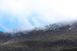 Snow showers on the Great Western Tiers near Liffey in northern Tasmania.