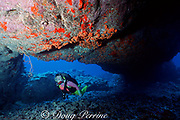 diver swims under lava arch encrusted with orange cup corals, Big Crevasse, Kaupulehu, Kona, Hawaii ( the Big Island), United States ( Central Pacific Ocean ) MR 286