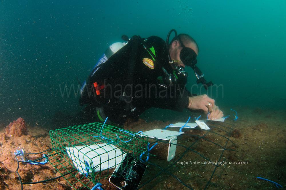 underwater researchers