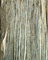 Wood Textures and pattern from driftwood found on Blackbeard Island, Georgia USA Weathered wood images from the driftwood beach on Blackbeard Island, Georgia