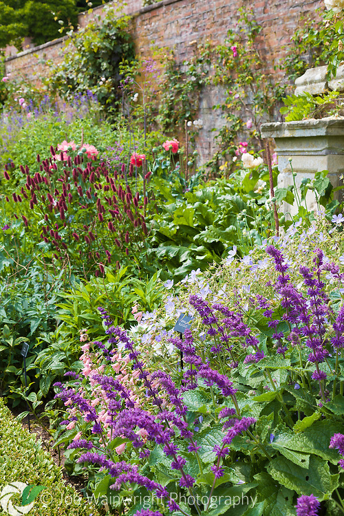 A profusion of herbaceous perennials in a herbaceous border at Powis Castle, Welshpool, photographed in July