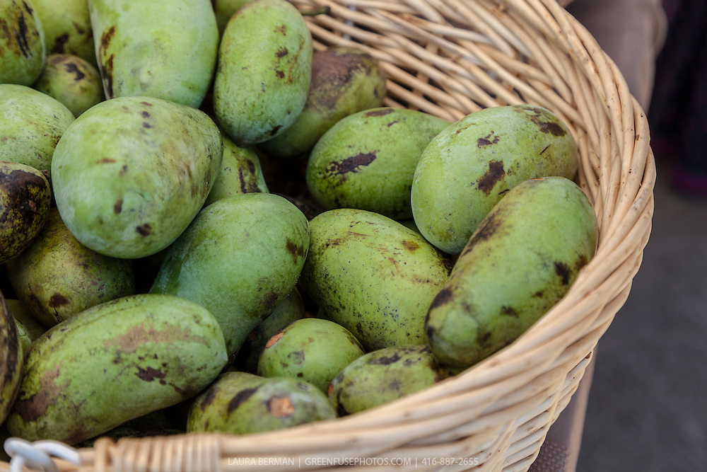 A basket of Pawpaws, the edible fruit of the Pawpaw tree, a NorthAmerican native tree (Asimina triloba).