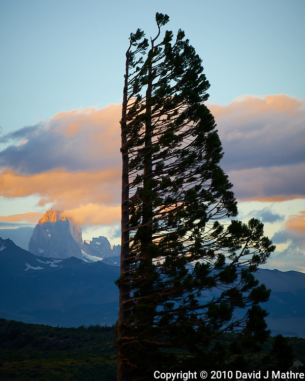 Windblown Tree and Fitzroy in Patagonia at Sunset. Estancia Helsingfors, Glacier National Park, Argentina. Image taken with a Nikon D3x camera and 70-300 mm VR lens (ISO 100, 180 mm, f/11, 1/60 sec).