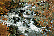 Stream flowing through the woods
