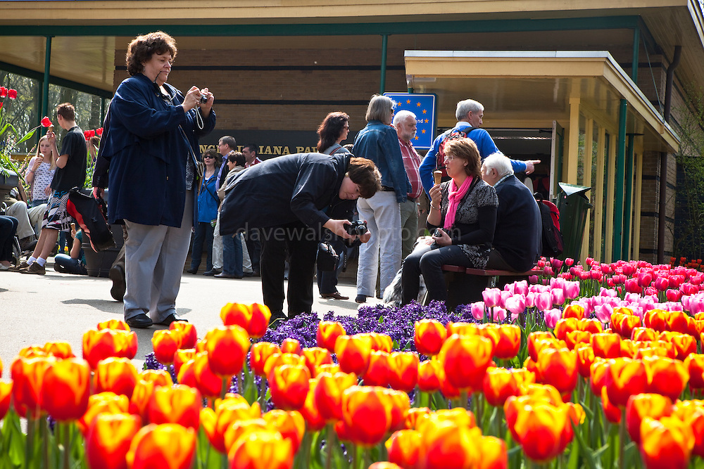 Women photographing flowers at the Keukenhof tulip and flower show in Lisse, Holland - Netherlands Editorial Use only.