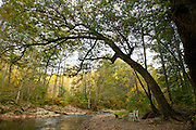 Tree with rope swing by river summer foliage