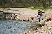 Trout fisherman landing catch at Roaring River State Park in southwest MIssouri.