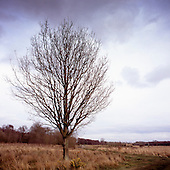 Trees, Lopham Fen, Suffolk | Colour
