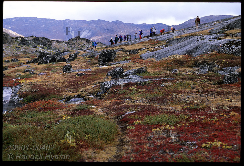 Clipper Adventurer cruise ship passengers hike along ridge above colorful autumn tundra & glacial tarn; Tasiusaq Bay Greenland