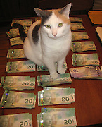 cats with cash<br /> Cats - you either love them or cat them. So how about in these hard times do people think about cats with cash. What started out as a bit of fun has turned in to a bit of a trend around the world now every cat owner wants to show how rich their puss is. The Cashcats website is literally packed with moggies packing heat along with piles of bank notes. And some of them are covered in literally hundreds that should make non cat lovers change their feelings about the wealthy felines. No, we doubt it too.<br /> ©Exclusivepix