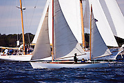 Rosie sailing in the Indian Harbor Classic Yacht Regatta.