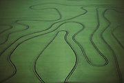 Rice: Aerial photograph of rice fields near Yuba City, California, USA. 1984.