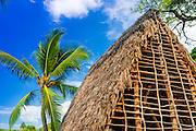 Thatched hut and palm, Pu'uhonua O Honaunau National Historic Park (City of Refuge), Kona Coast, Hawaii USA