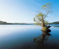 Tree reflecting on still water of lake