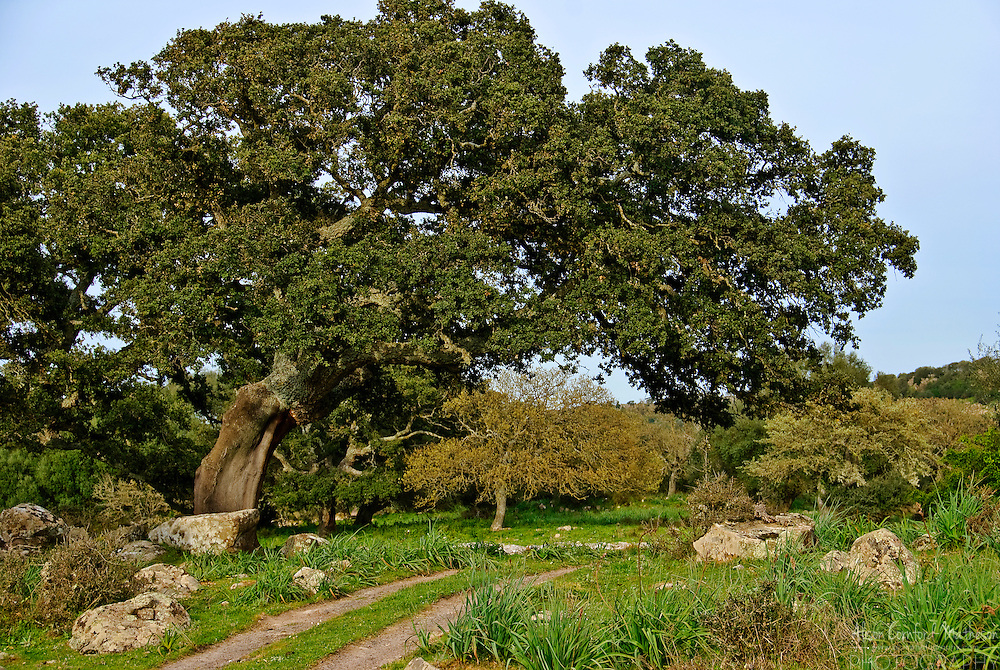 Trees that produce cork are a staple agricultural product of Sardinia.