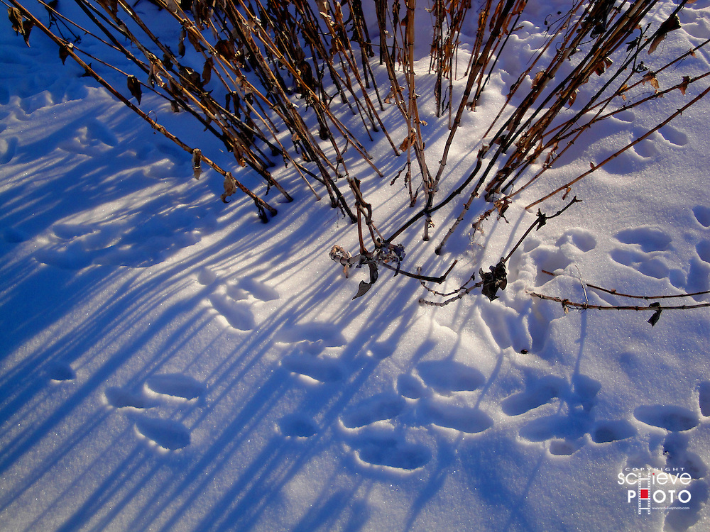 Animal tracks in the snow.
