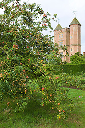 View towards the Tower from the Orchard at Sissinghurst Castle. Apple tree in the foreground