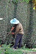 Gardener works in a garden