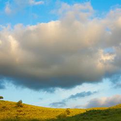 Grassy hillside and tree under cloudy skies. Orange County, CA.