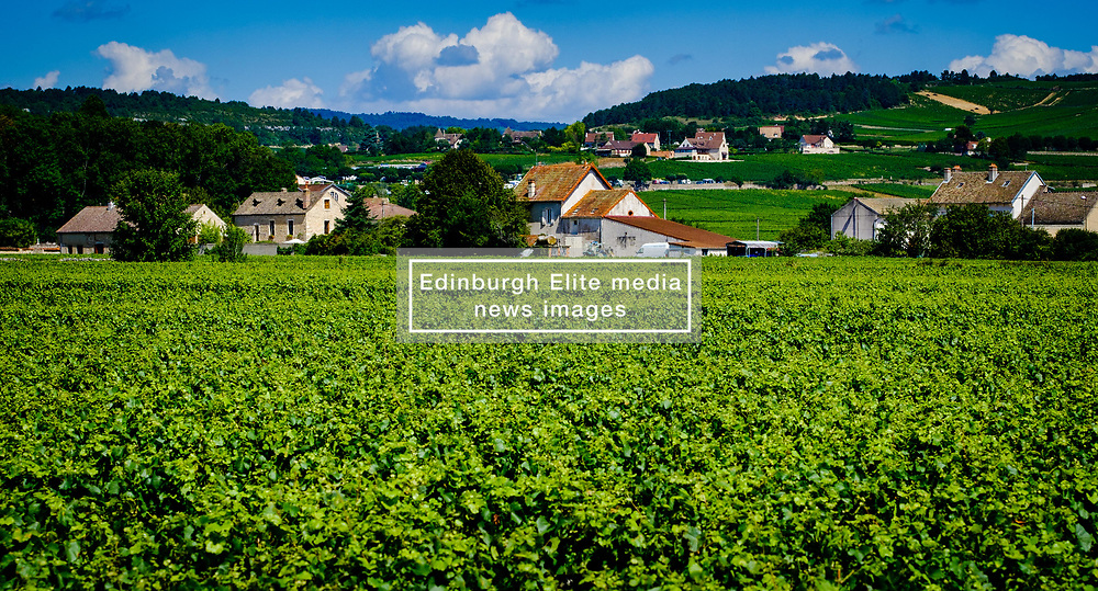 Vineyard near Beaune, Burgundy, France in summer<br /> <br /> (c) Andrew Wilson | Edinburgh Elite media