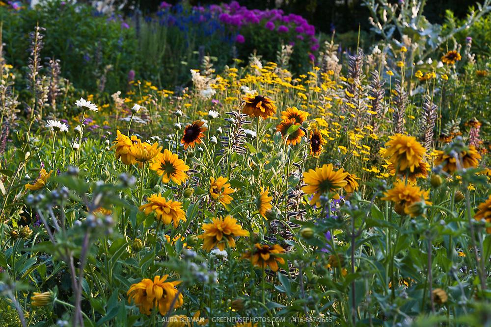 perennial flower garden  greenfuse photos garden, farm  food, Natural flower