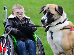 Crufts 2013 launch of annual dog show. The Kennel Club announces the official finalists of the Crufts dog heroes competition, Friends for Life, recognising pooches that help in war zones and assist the disabled. Green Park, The Kennel Club, London, United Kingdom..-Owen Howkins and Haatchi.  Haatchi had to have a leg and his tail removed after being tied to a railway line in London and struck by a train.  Just a month later he was found on Facebook by the family of Owen, a 7 year old boy with a rare genetic condition called Schwartz Jampel Syndrome, which causes his muscles to be permanently tense.  Owen, who was previously too withdrawn to leave his house now enjoys a busy social life with his beloved pet, London, United Kingdom, February 21, 2013. Photo by Nils Jorgensen / i-Images.