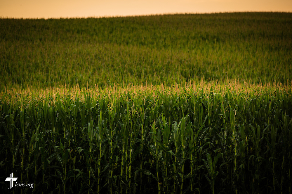 The sun sets over a corn crop next to Mission Central on Saturday, July 18, 2015, in Mapleton, Iowa. LCMS Communications/Erik M. Lunsford
