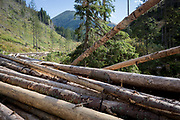 The timbers of healthy, felled spruce trees await collection in Dolina Chocholowska a hiking route in the Polish Tatra mountains, on 17th September 2019, near Zakopane, Malopolska, Poland. In this region of southern Poland however, the European spruce beetle (Ips typographus) is one of 116 bark beetles species in Poland which is killing thousands of spruces. The insect's population can grow rapidly via wind and snow etc. which eventually leaves a gap in the landscape, thereby changing the forest floor's ecology.