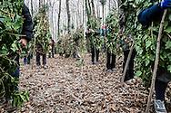 Satriano di Lucania, Basilicata, Italia, 07/02/2016<br /> I Rumita lasciano il bosco Spera per invadere il paese. Il carnevale di Satriano di Lucania &egrave; alla sua quarta edizione. Quest'anno il Rumit &egrave; andato anche all'Expo di Milano, insieme alla Coldiretti Basilicata<br /> <br /> Satriano di Lucania, Basilicata, Italy, 07/02/2016<br /> The Rumita (hermits) leaving the Bosco Spera (Spera Wood) to parading all around the town. This is the fourth edition of the carnival of Satriano di Lucania. This year the Rumita (hermit) also participated to the Expo in Milan, together with Coldiretti of Basilicata.