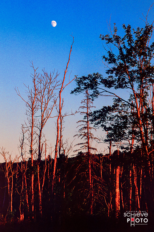 Moonrise in the Chequamegon National Forest.